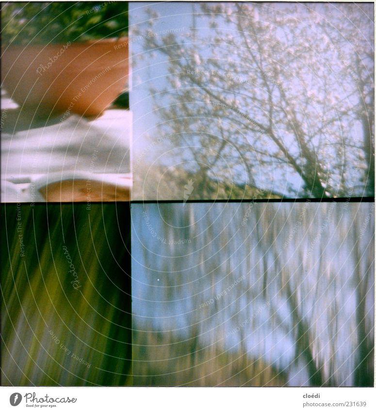 kirschblütenbaum Pflanze Frühling Baum Blume Blüte Topfpflanze Garten blau grün violett Frühlingsgefühle Außenaufnahme Lomografie Bewegungsunschärfe Sonnenlicht