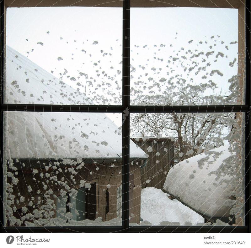 Quarantäne Wohnung Himmel Wolkenloser Himmel Winter Wetter Schönes Wetter Eis Frost Schnee Pflanze Baum Zweige u. Äste Bauwerk Gebäude Architektur Hof Fenster