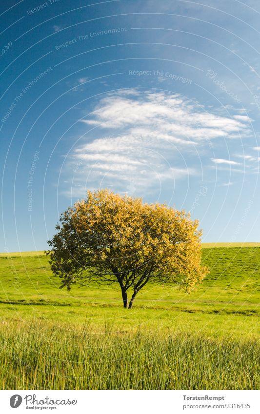 Tree Sommer Natur Landschaft Wolken Baum Wiese blau Ausblick Aussicht deutschland himmel Thüringen Thüringer Wald Farbfoto Außenaufnahme Menschenleer Tag