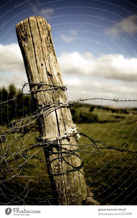 Symbolischer Zeitenwandel Umwelt Natur Landschaft Himmel Wolken Schönes Wetter Gras Holz Knoten mehrfarbig Stacheldrahtzaun Zaun Holzpfahl Sommer Farbfoto