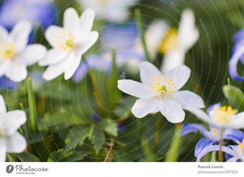 für alle Mädchen Natur weiß schön Pflanze Blume Blatt gelb Umwelt Glück Blüte Garten Frühling Wetter Erde weich zart