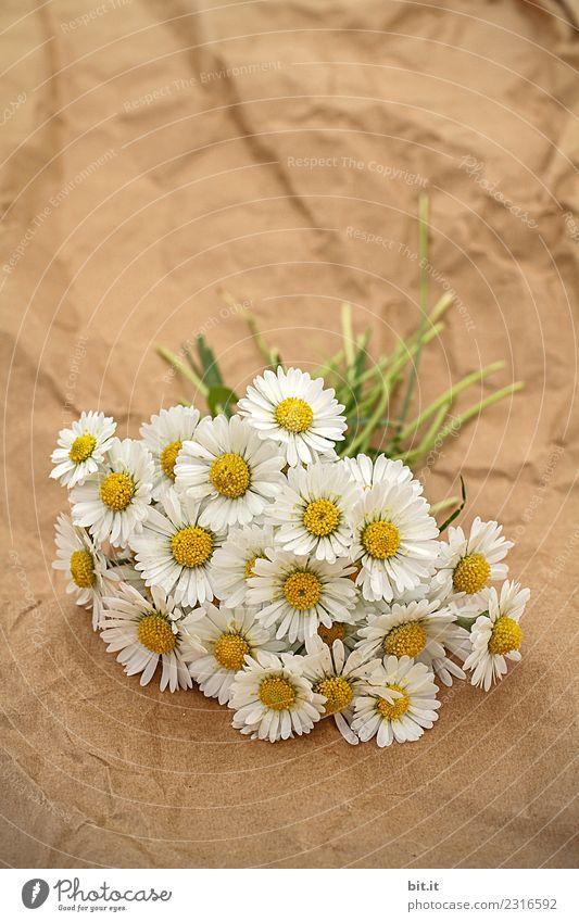 Blumensträußchen Pflanze Sommer Erholung Blüte Liebe Frühling natürlich Glück Feste & Feiern Freundschaft Dekoration & Verzierung liegen frisch Geburtstag