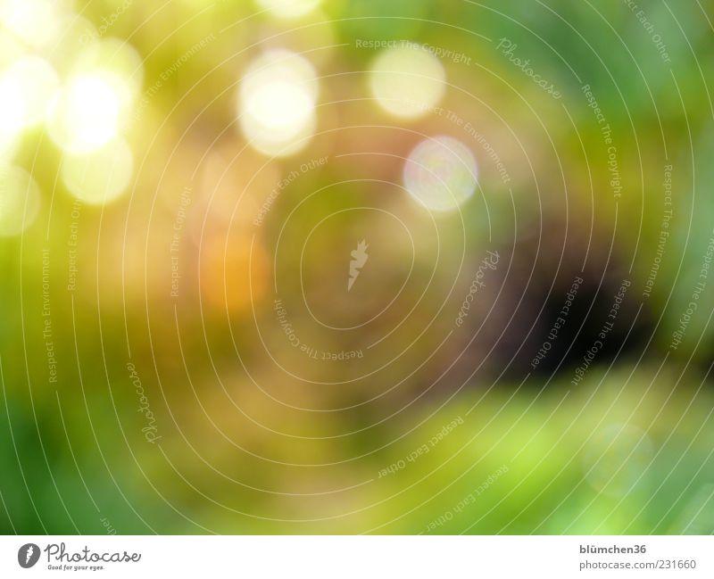 Lichtpunkte grün Pflanze gelb Leben Hintergrundbild ästhetisch außergewöhnlich Punkt Moos exotisch Inspiration Textfreiraum Frühlingsgefühle