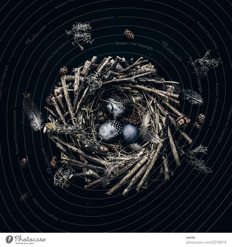 Das Nest Ostern Holz ästhetisch blau braun schwarz Frühlingsgefühle Vorfreude Feder Osternest Osterei Ei Flechten Tradition Suche finden Stroh Saison Farbfoto