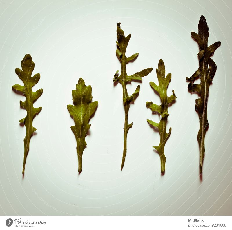 die gruenen alt grün Blatt grau Lebensmittel Gesundheit Gemüse lecker Salat gerade essbar Ernährung Menschenleer Salatblatt