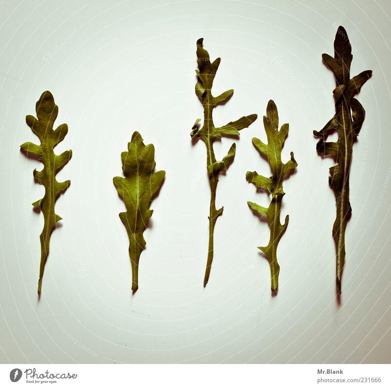 die gruenen Gemüse Gesundheit lecker grau grün gerade 5 alt Farbfoto Menschenleer Textfreiraum oben Textfreiraum unten Tag Licht Schatten Hintergrund neutral