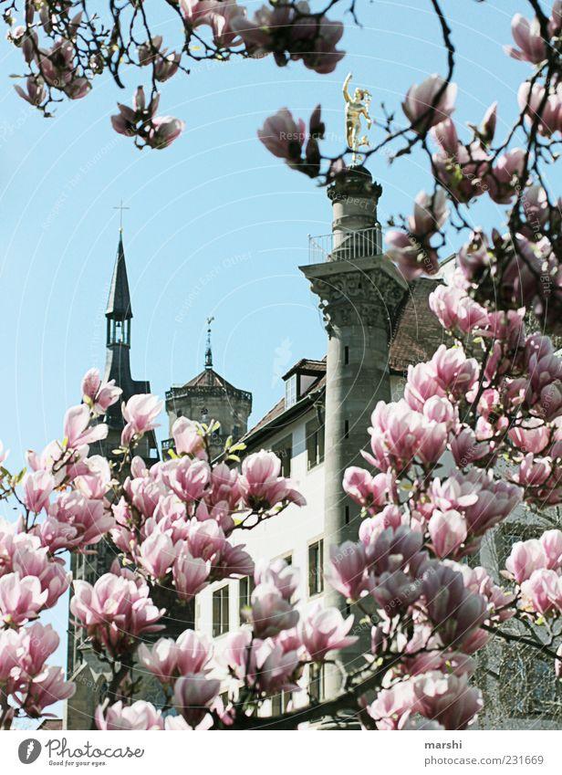 Stuttgart im Frühling Natur Pflanze Himmel Baum Turm Sehenswürdigkeit Denkmal alt rosa Magnolienbaum Magnolienblüte Magnoliengewächse niedlich Durchblick