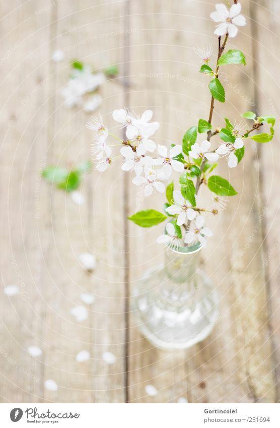 Ever Dream Natur grün weiß schön Blatt Holz Blüte Frühling hell Glas frisch Dekoration & Verzierung zart Zweig Vase Blütenblatt