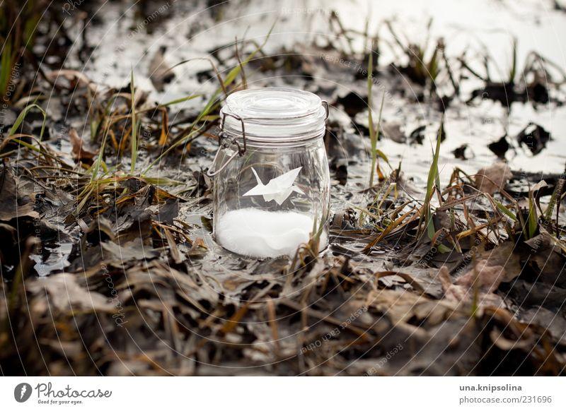 grue Umwelt Natur schlechtes Wetter Regen Gras Blatt Feld stehen nass Glas Marmeladenglas Phantasie Origami träumen außergewöhnlich Einmachglas Herbstlaub