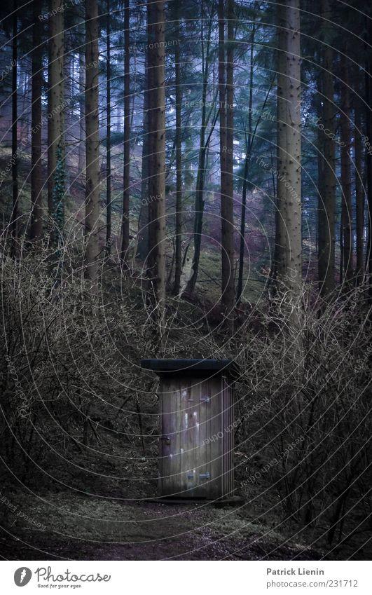 stilles Örtchen Natur blau Baum Pflanze Wald kalt dunkel Umwelt Holz natürlich Sträucher Urelemente Hügel Toilette Hütte Holzhaus