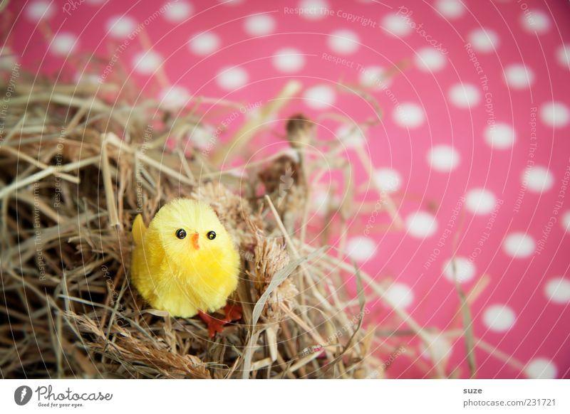Nestlé schön Tier gelb klein lustig Vogel rosa sitzen Dekoration & Verzierung niedlich Kitsch Ostern trashig Stroh gepunktet