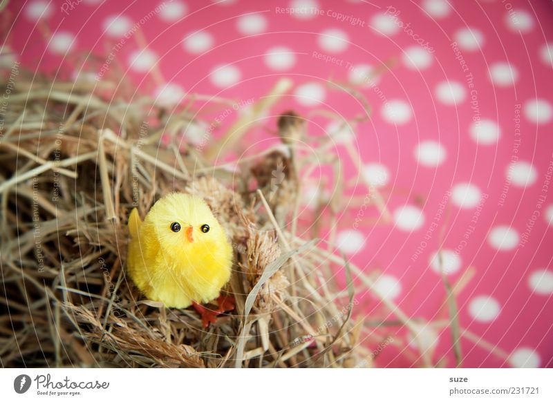 Nestlé schön Tier gelb klein lustig Vogel rosa sitzen Dekoration & Verzierung niedlich Kitsch Ostern trashig Stroh Nest gepunktet
