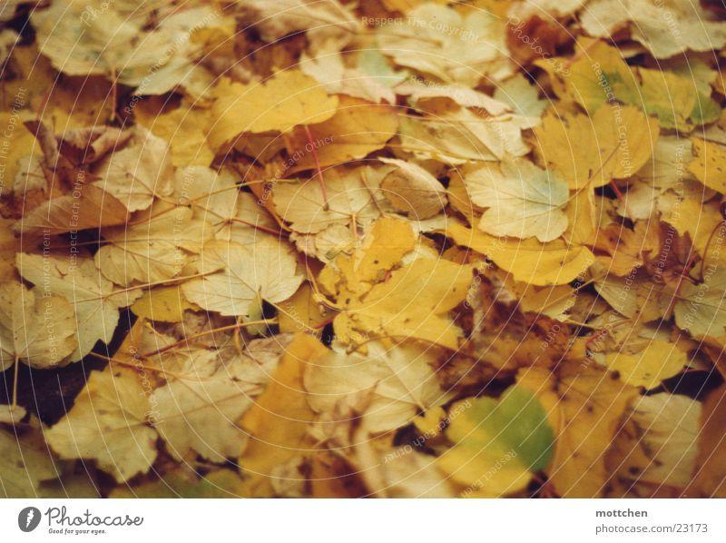 herbstteppich Blatt Herbst Teppich Färbung