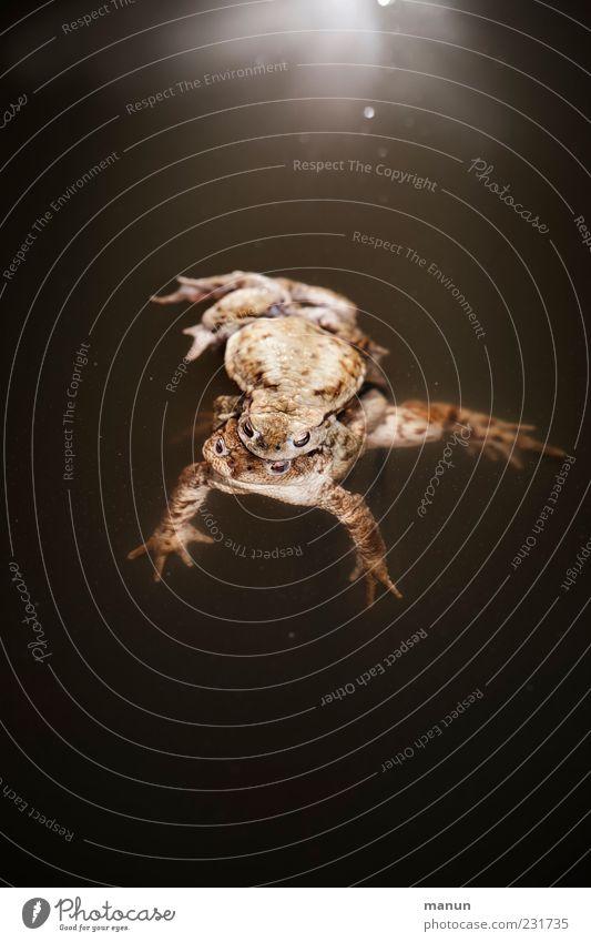 Froschperspektive Natur Wasser Tier Gefühle Frühling braun Zusammensein Schwimmen & Baden natürlich Beginn Wildtier authentisch Konzentration Kontakt machen genießen