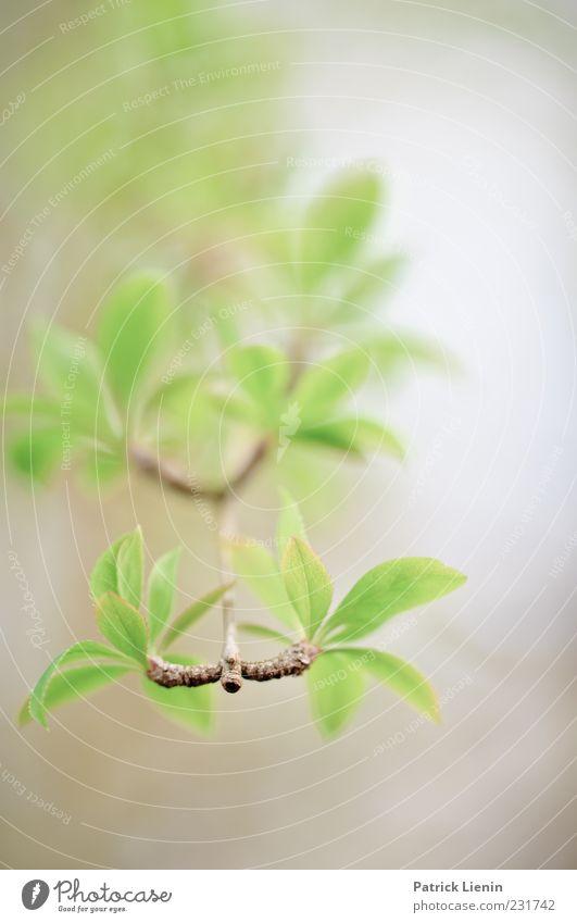 Wonderful World Umwelt Natur Pflanze Urelemente Luft Frühling Blatt Grünpflanze Wildpflanze ästhetisch schön weich Botanik Trieb Ast dezent grün zart Farbfoto