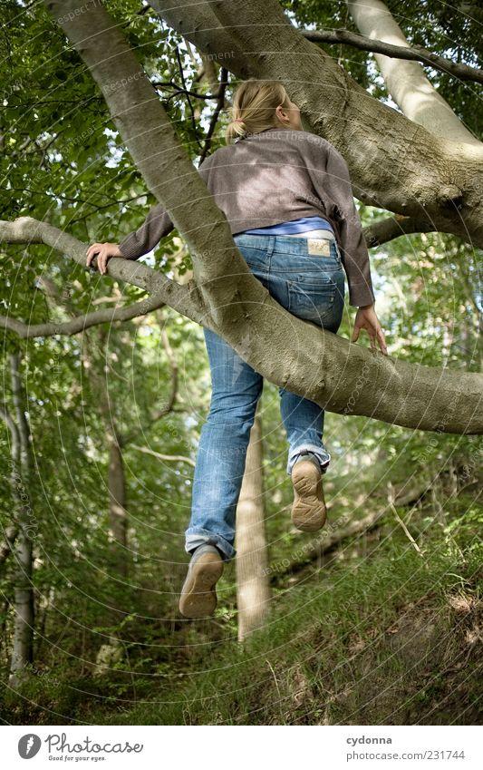 Es geht noch höher Mensch Natur Jugendliche Baum Sommer Blatt Erwachsene Wald Umwelt Leben Freiheit Bewegung Wege & Pfade träumen Freizeit & Hobby elegant