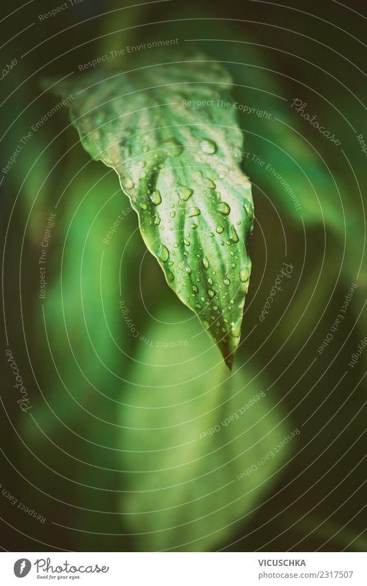 Grünes Blatt Nahaufnahme Lifestyle Sommer Garten Natur Pflanze Grünpflanze Park Wald Urwald Hintergrundbild grün Wassertropfen tropisch Farbfoto Außenaufnahme