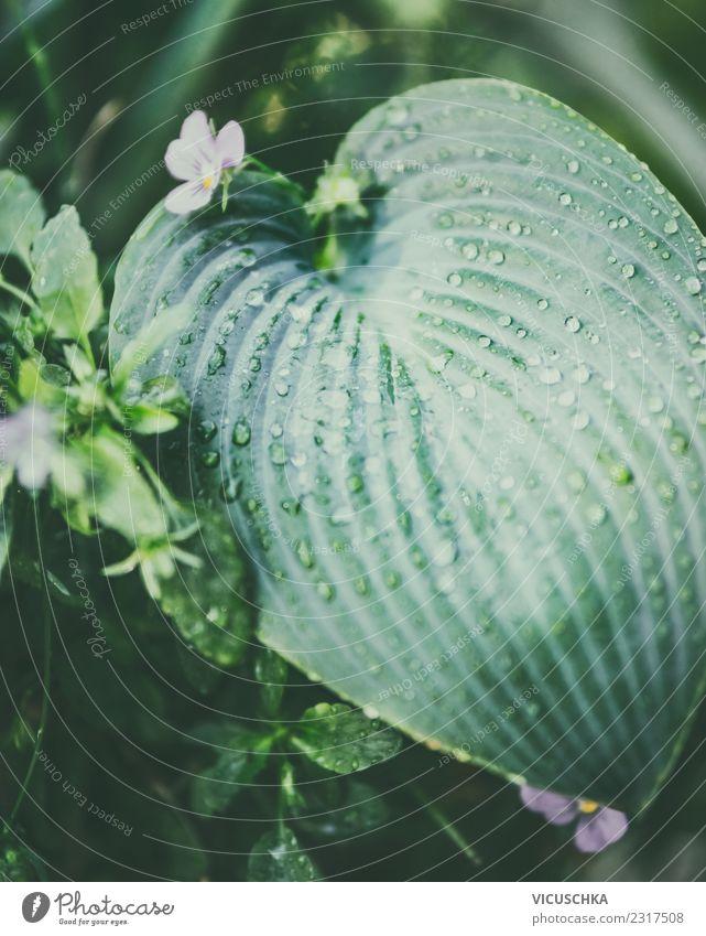 Tropisches Blatt mit Wassertropfen Lifestyle Leben Sommer Garten Natur Pflanze Grünpflanze Park Hintergrundbild grün Wasserfahrzeug Botanik Urwald feucht