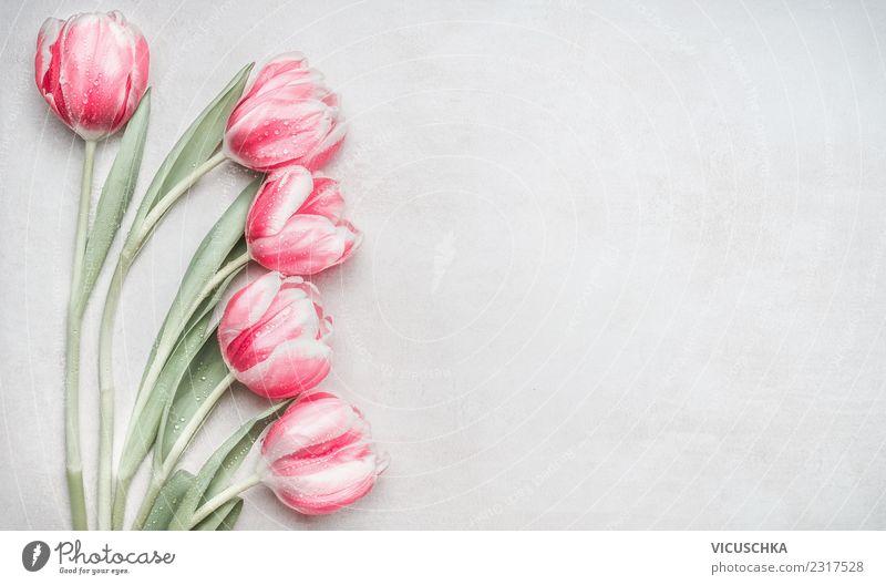Pastell rosa Tulpen Stil Design Feste & Feiern Muttertag Hochzeit Geburtstag Natur Pflanze Frühling Blume Dekoration & Verzierung Blumenstrauß Liebe