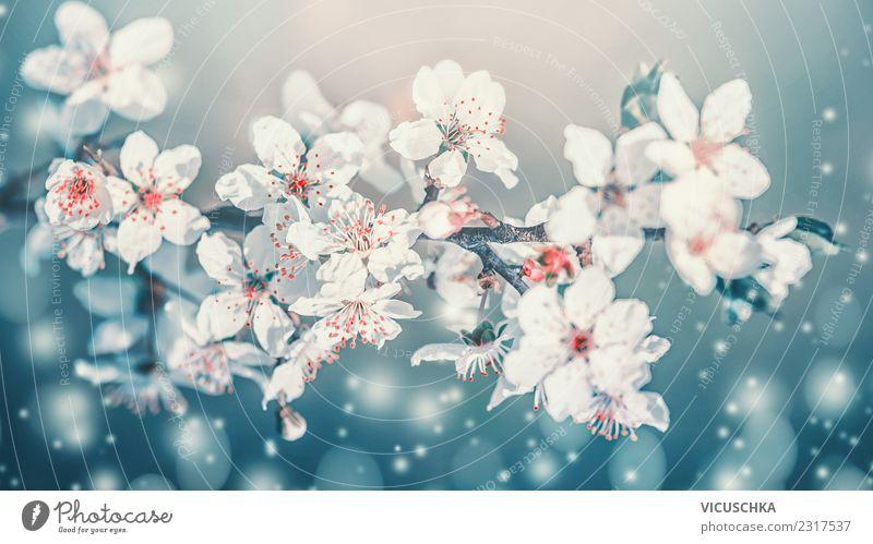 Schöne Frühlingsblüten Nahaufnahme Lifestyle Design Garten Natur Pflanze Himmel Schönes Wetter Blüte Park Blumenstrauß Blühend blau türkis weiß Kirschblüten