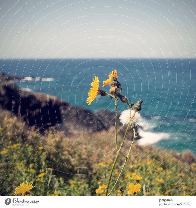 sommer Umwelt Natur Landschaft Pflanze Urelemente Wasser Himmel Wolkenloser Himmel Horizont Frühling Sommer Klima Wetter Schönes Wetter Blume Gras Blatt Blüte