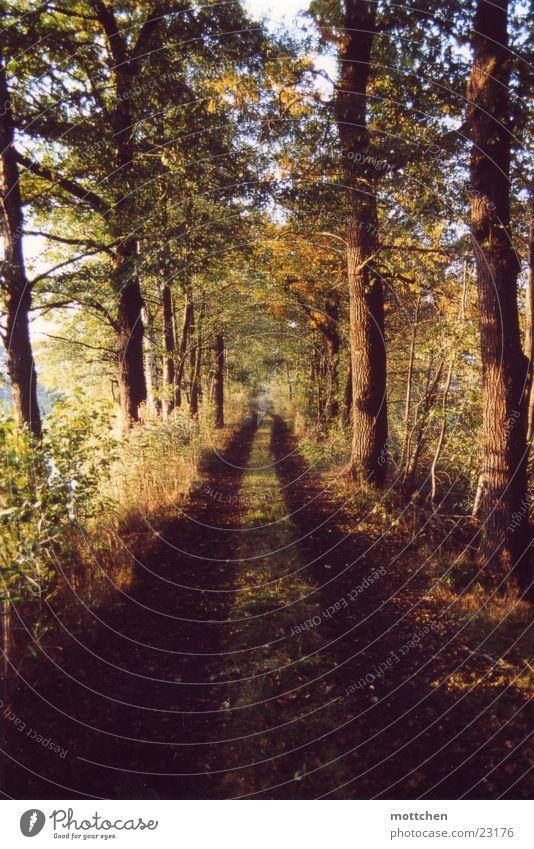herbstweg Baum Blatt Herbst Wege & Pfade Fußweg Allee