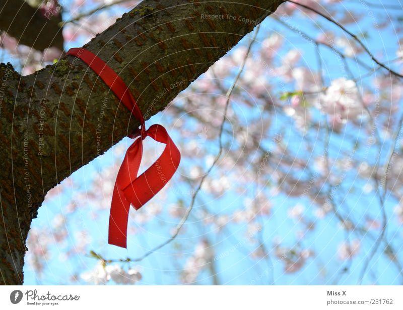 Die rote Schleife Natur Frühling Schönes Wetter Baum Blatt Blüte Blühend hängen Solidarität Zeichen AIDS Knoten Ast Zweige u. Äste Kirschbaum Kirschblüten