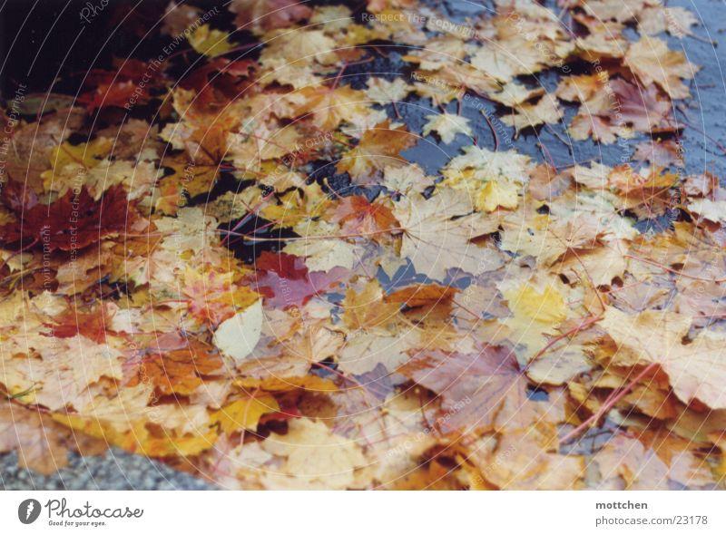 bunter herbst Herbst Blatt Pfütze nass mehrfarbig Regen