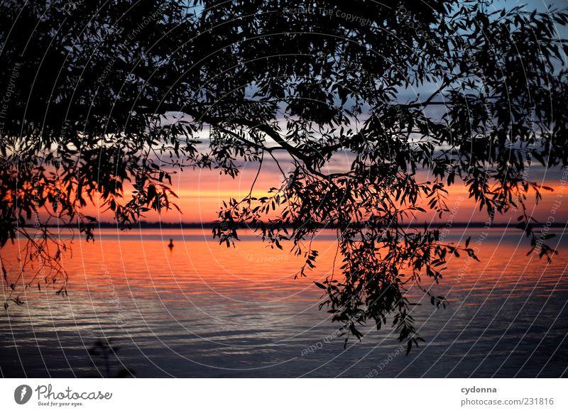 Sometimes harmonisch Wohlgefühl Erholung ruhig Umwelt Natur Landschaft Wasser Himmel Horizont Sonnenaufgang Sonnenuntergang Baum Seeufer Einsamkeit Freiheit