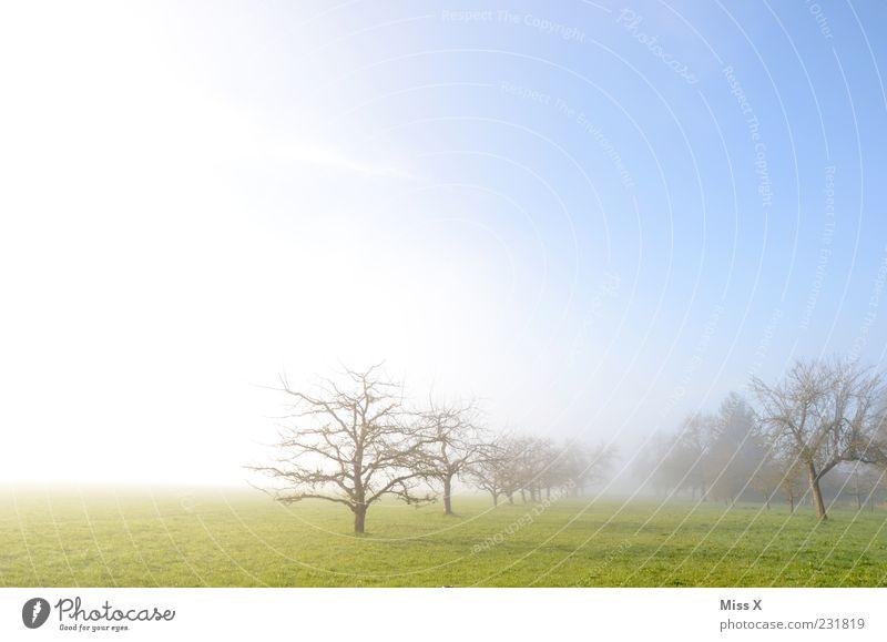 mein bestes Foto 2011 Himmel blau Baum Ferne kalt Wiese Frühling Luft Stimmung Wetter Horizont Feld Nebel Beginn Idylle Schönes Wetter