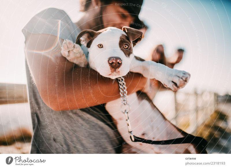 Süßer Welpe und sein Besitzer am Strand Lifestyle Freude Glück Sommer Sonne Mann Erwachsene Freundschaft Natur Tier Park Haustier Hund Lächeln Umarmen