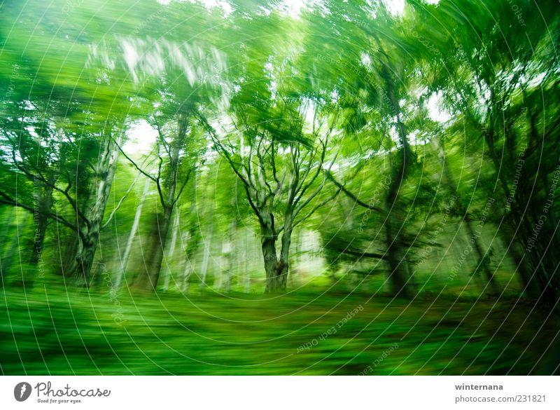 Grüne Geisterbäume Umwelt Natur Landschaft Erde Frühling Schönes Wetter Baum Urwald Berge u. Gebirge Holz Gefühle Fröhlichkeit Tapferkeit Optimismus