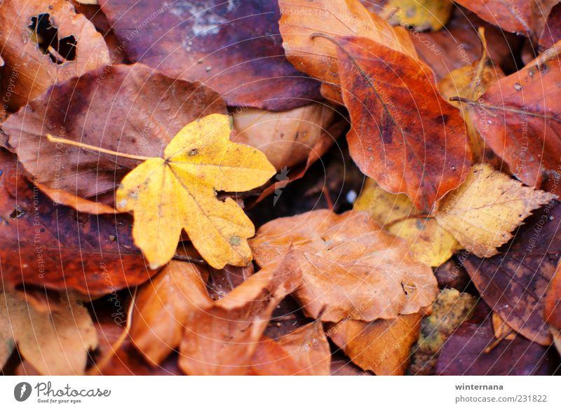 Natur Pflanze Blatt Berge u. Gebirge Umwelt Gefühle Freiheit Zufriedenheit Warmherzigkeit Romantik Glaube Frieden Gelassenheit Geborgenheit Tatkraft Akzeptanz