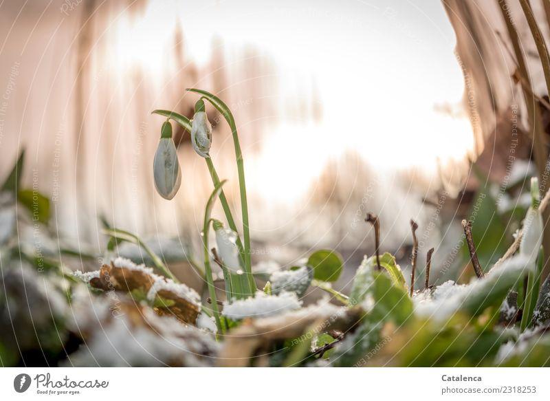 Drüber und drunter | die Temperaturen Natur Pflanze grün Blume Blatt Winter Wald gelb kalt Blüte Wiese Schnee klein braun orange Stimmung