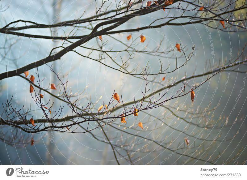 Zweige im Licht Natur Pflanze Sonnenlicht Schönes Wetter Nebel Baum Blatt Ast Buche Wald ruhig Farbfoto Außenaufnahme Menschenleer Morgen Sonnenstrahlen