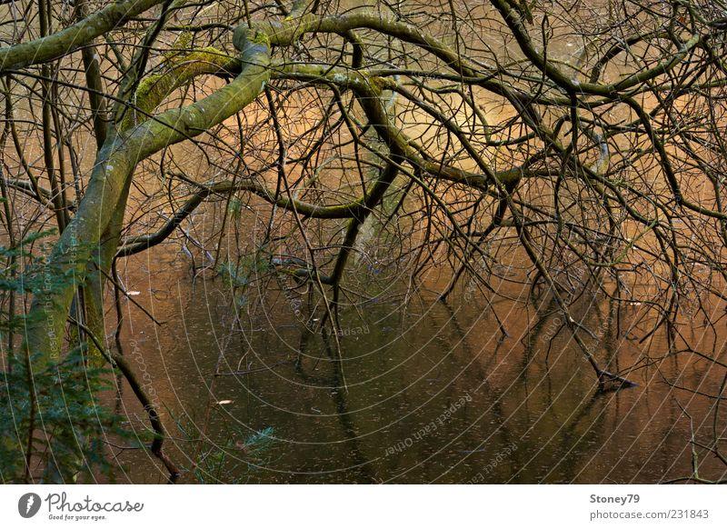 Geäst Natur Landschaft Pflanze Winter Eis Frost Baum Ast Seeufer Teich trist wild braun gold gefroren Neigung Zweig Farbfoto Außenaufnahme Menschenleer