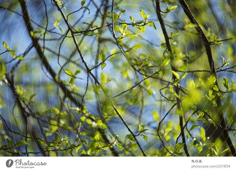 Frischfröhlich Himmel Natur blau grün Baum Pflanze Blatt Umwelt Gefühle Frühling natürlich Schönes Wetter Zweig Frühlingsgefühle Schatten