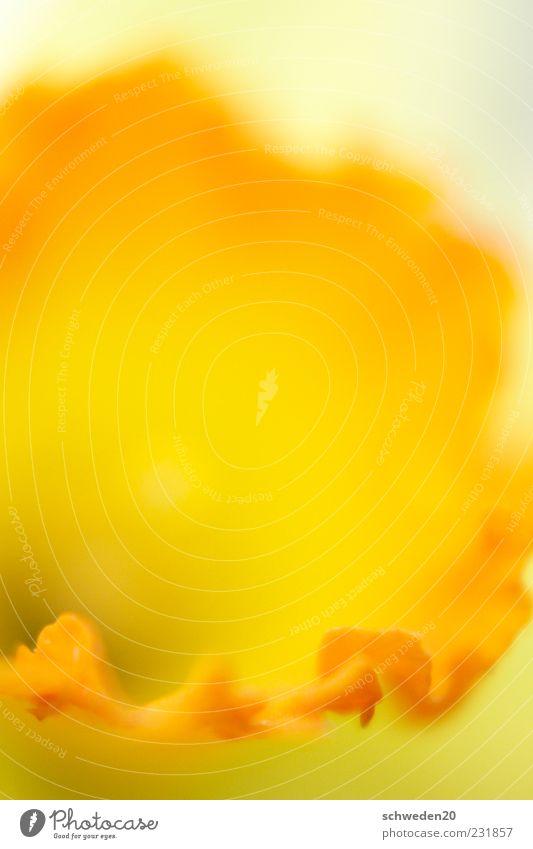 es wird wärmer Natur schön rot Pflanze Sommer Blume gelb Gefühle Blüte Frühling Stimmung orange ästhetisch Wachstum leuchten Am Rand