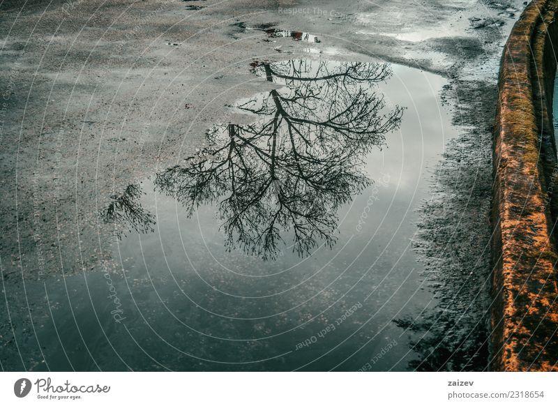 Wasserpfütze auf Asphalt und alter Straße, die im Winter einen Laubbaum widerspiegelt schön Ausflug Natur Wetter Regen Baum Wald hell nass natürlich blau Licht