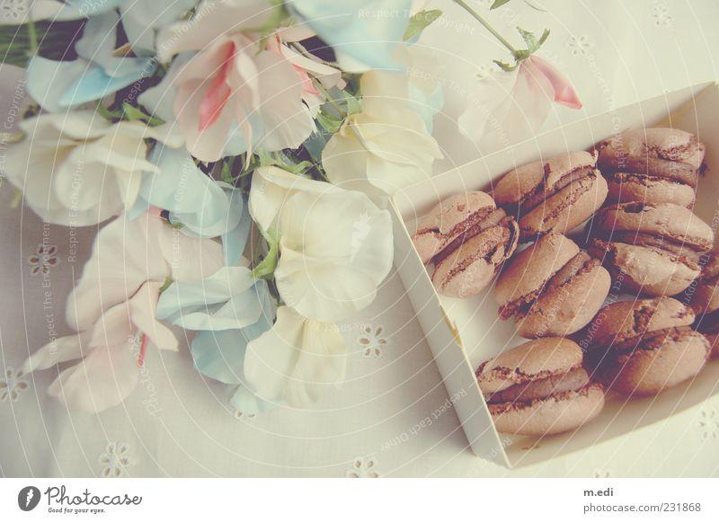 Fleurs et macarons II braun mehrere Kitsch Süßwaren Appetit & Hunger lecker Schokolade Backwaren Keks Dessert Schachtel Verpackung Speise Lebensmittel Dekoration & Verzierung Kunstblume