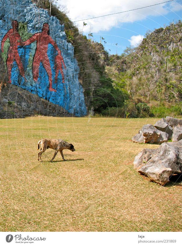 Hund vor Wandbild Kunst Maler Gemälde Natur Landschaft Urelemente Himmel Wolken Schönes Wetter Felsen Valle de Viñales Tier Haustier 1 Stein gehen