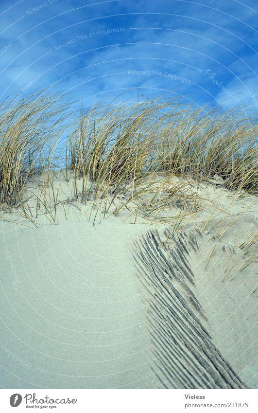 Spiekeroog wir kommen Himmel Natur blau Ferien & Urlaub & Reisen Strand Erholung Gras Sand Tourismus Nordsee Stranddüne Schönes Wetter Wohlgefühl Dünengras