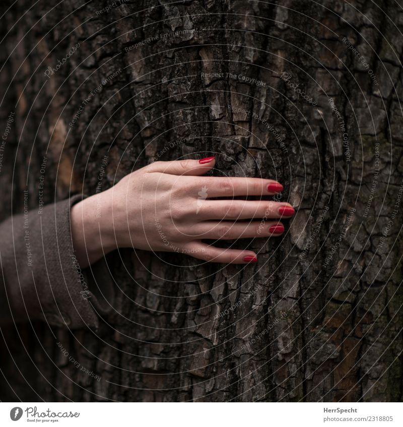 Treehugging feminin Junge Frau Jugendliche Erwachsene Hand 1 Mensch 18-30 Jahre Pflanze Baum authentisch elegant natürlich dünn Erotik Fingernagel Nagellack