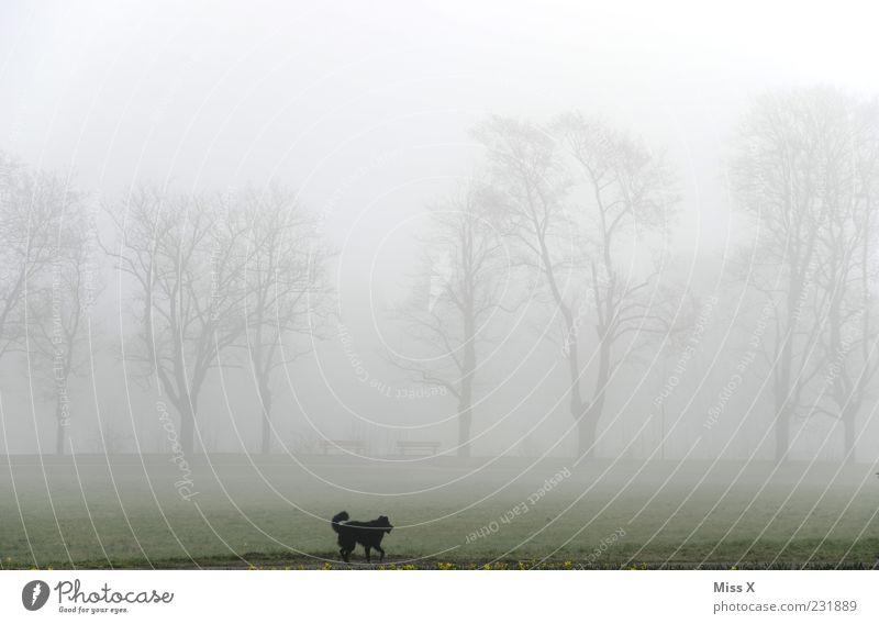 Wauzi im Nebel Hund Natur Baum Tier dunkel Wiese Landschaft kalt Park Wetter Nebel rennen Spaziergang Haustier Allee schlechtes Wetter