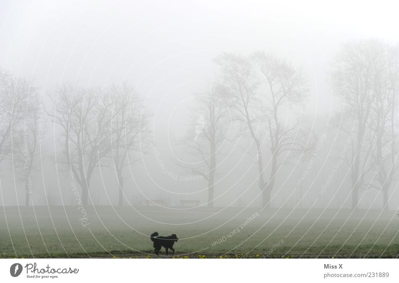 Wauzi im Nebel Hund Natur Baum Tier dunkel Wiese Landschaft kalt Park Wetter rennen Spaziergang Haustier Allee schlechtes Wetter