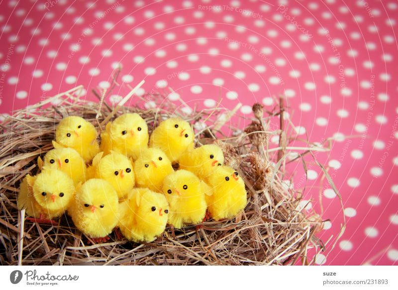 Twelve chickas schön gelb klein lustig Feste & Feiern rosa sitzen Dekoration & Verzierung niedlich Kitsch Ostern Stroh 12 Nest gepunktet