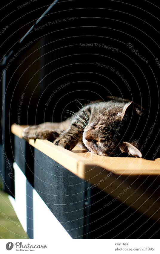 Tut mir leid, Lili - nur 'n Katzenfoto Schönes Wetter alt atmen Erholung genießen liegen schlafen träumen frei schön natürlich niedlich Wärme braun schwarz weiß