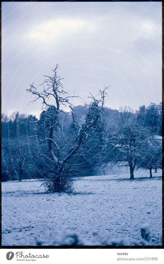Winterruhe Schnee Wiese alt dunkel kalt Schneedecke blau Schneelandschaft Romantik ruhig eigenwillig verwurzelt knotig Baum Farbfoto Gedeckte Farben