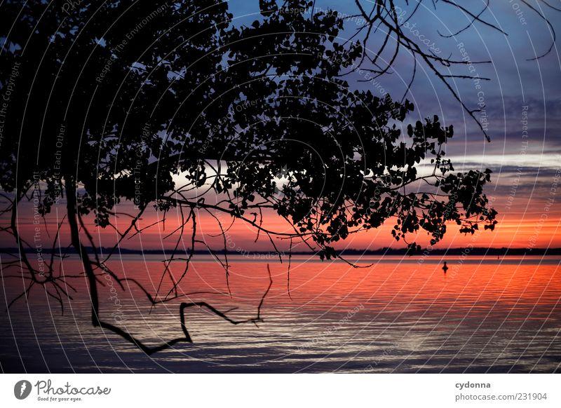 Still ruht der See harmonisch Wohlgefühl Erholung ruhig Ferne Freiheit Umwelt Natur Landschaft Wasser Horizont Sonnenaufgang Sonnenuntergang Baum Seeufer