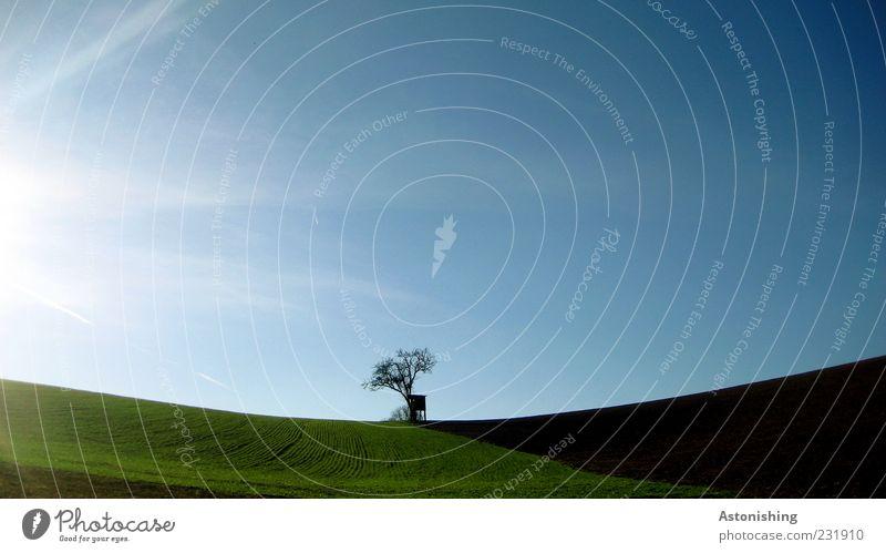 einsam Umwelt Natur Landschaft Pflanze Erde Himmel Wolkenloser Himmel Sonne Frühling Sommer Klima Wetter Schönes Wetter Baum Gras Wiese Feld Hügel blau braun